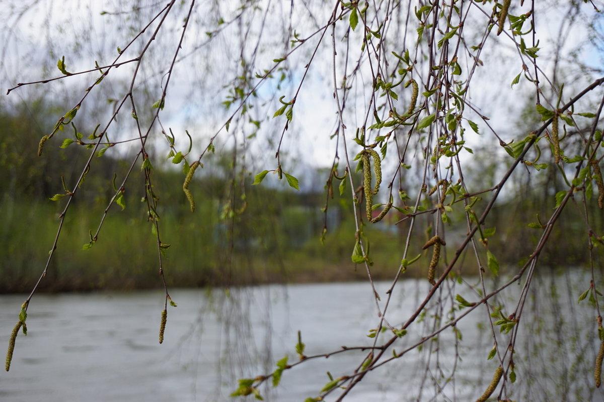 Картинка дождливой весны