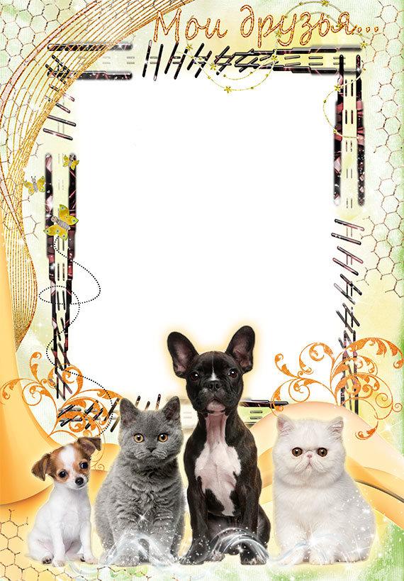 Картинки рамки с животными
