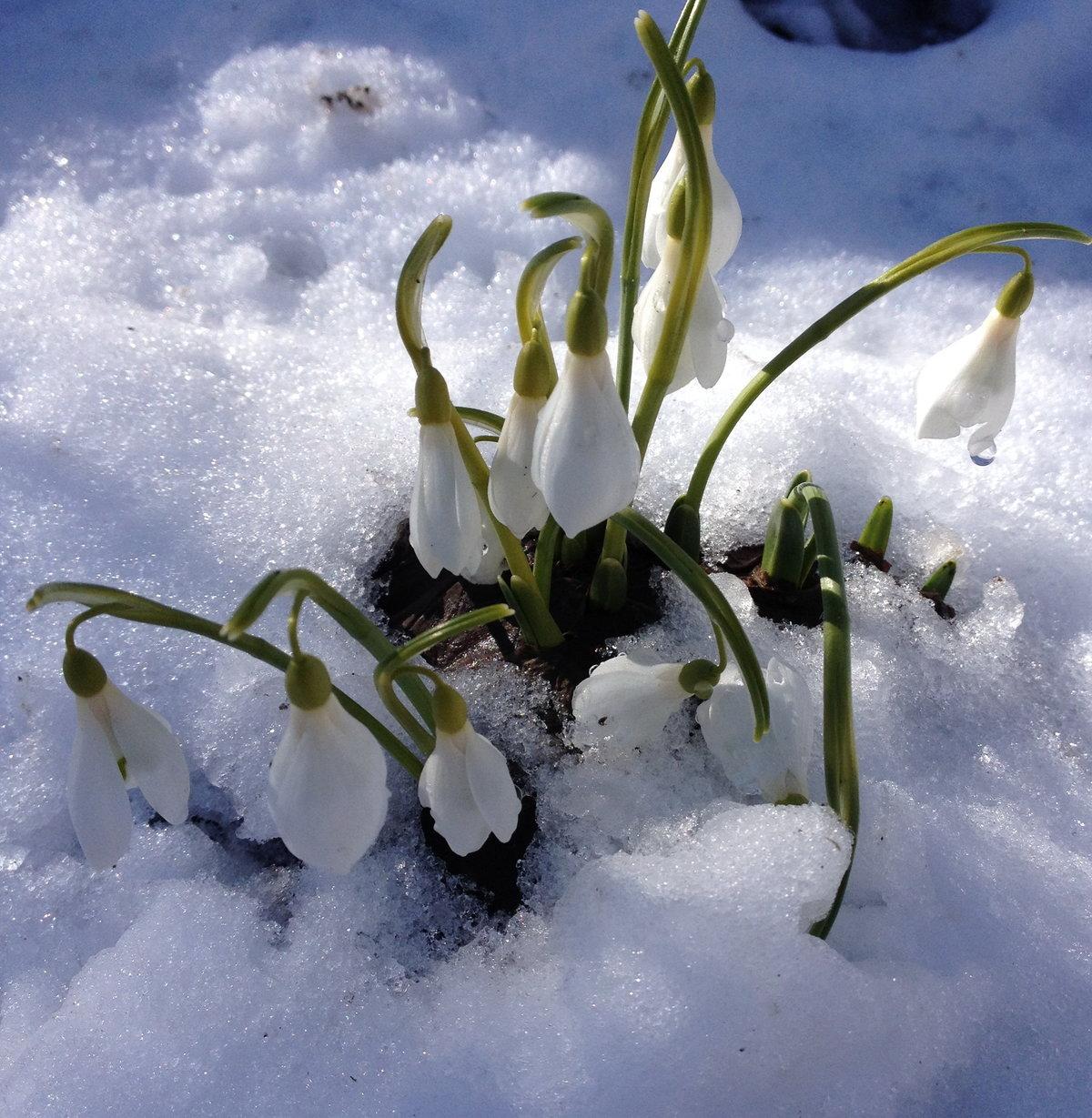 картинки гифки снег и подснежники рождения ребенка