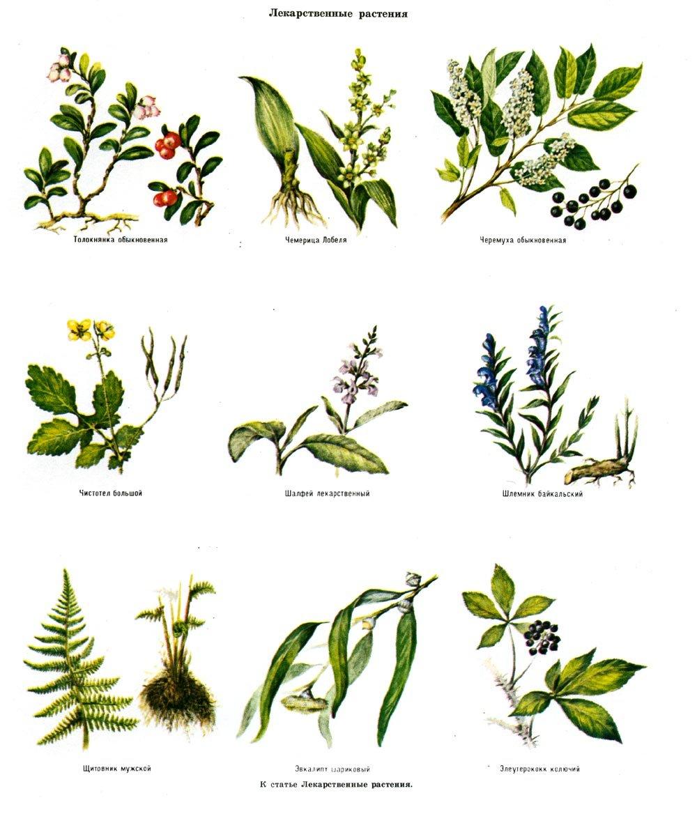 название растений с картинками лесных пляжи