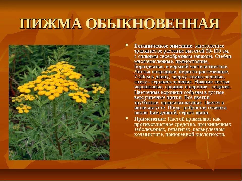 фото лекарственных растений с названиями и описанием желании