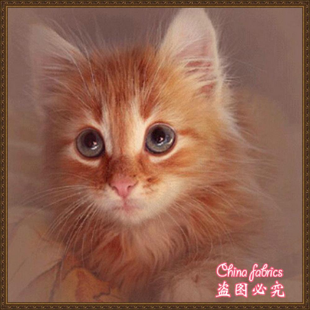 Живые картинки котята анимация, внучкой смешные