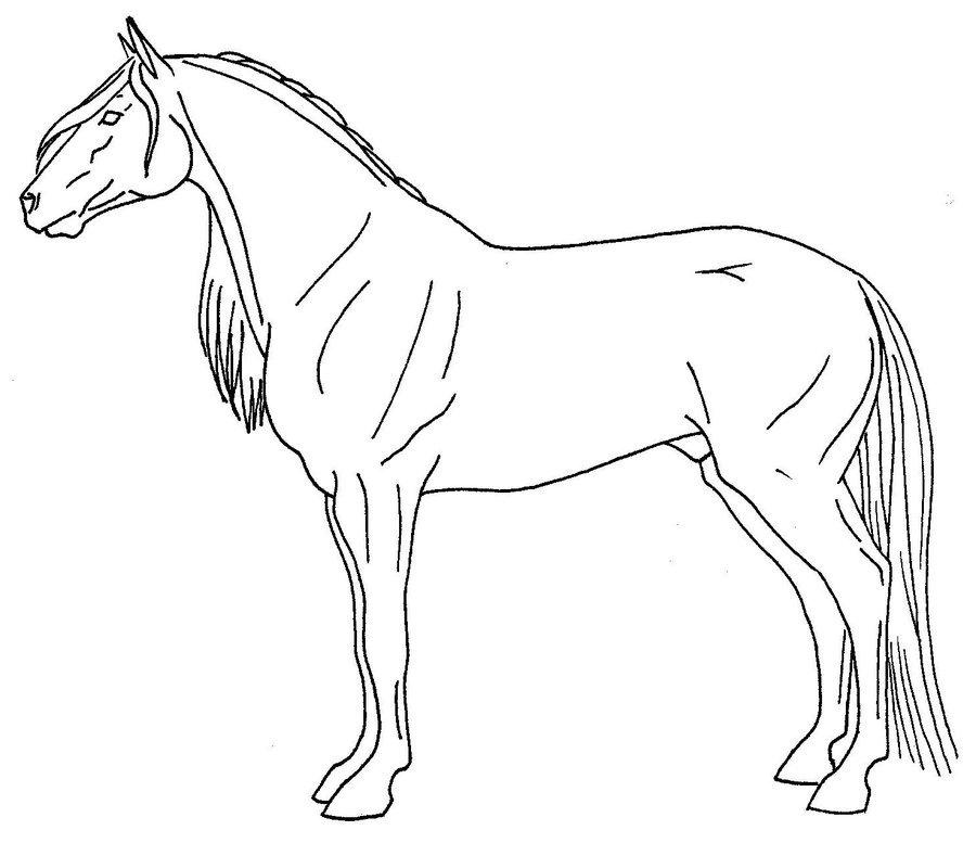 Картинки лошадей рисовать