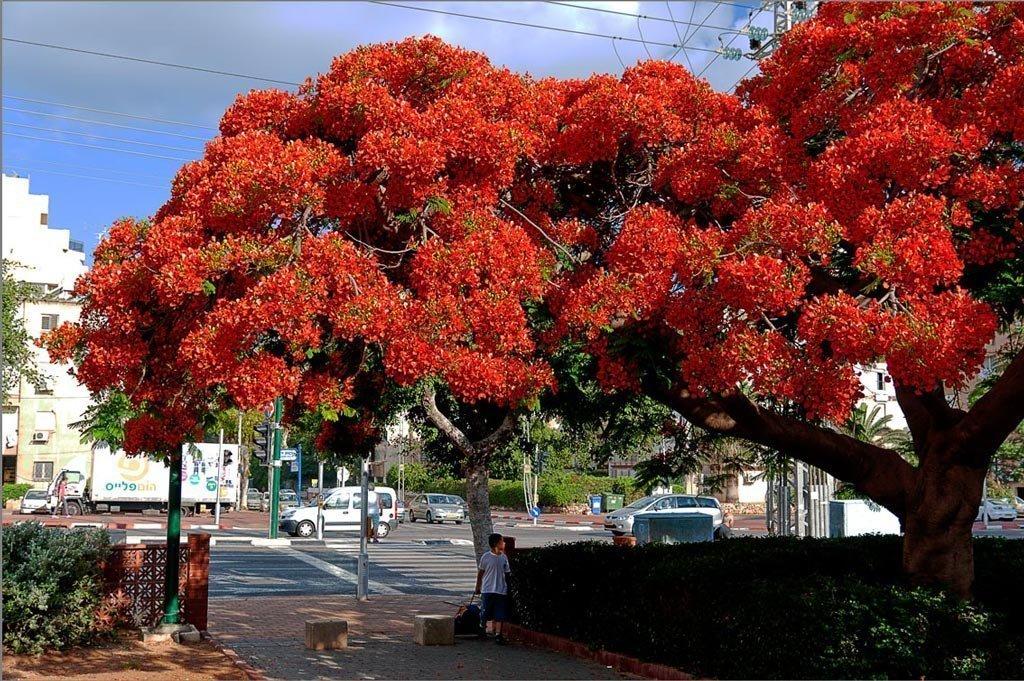 для деревья с красивыми цветами фото видела