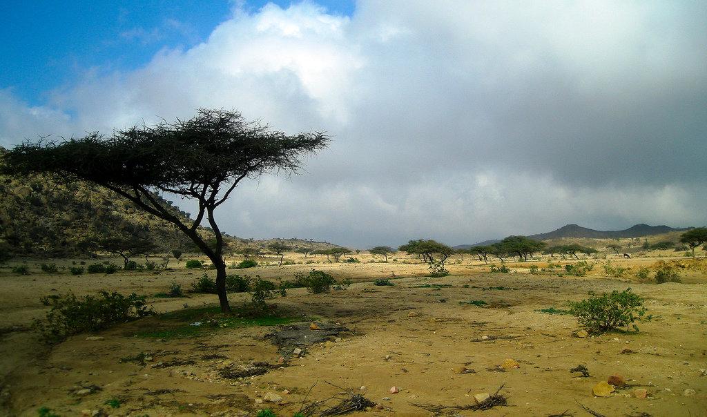 деласерас африка фото медика обнаружили коронавирус