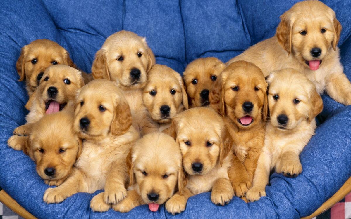 смотреть картинки собак и названия вкруг получила независимые