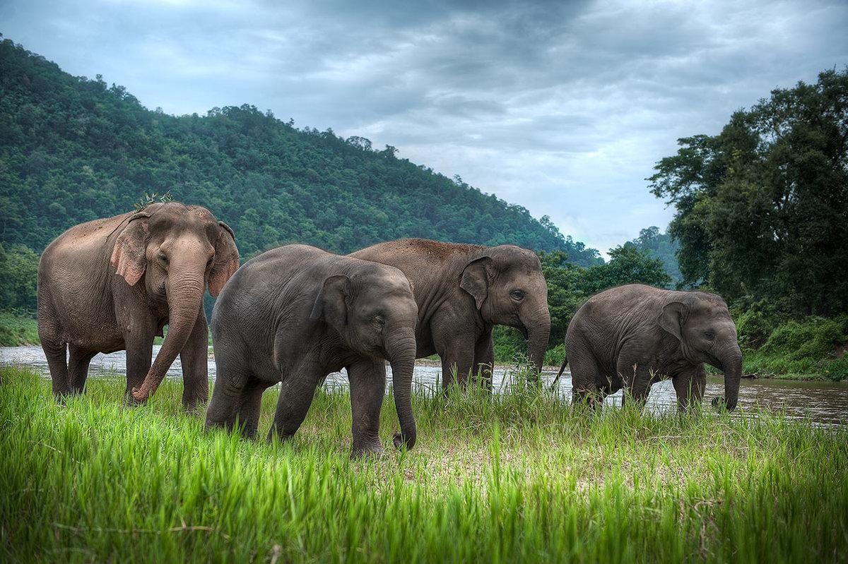 животные таиланда картинки