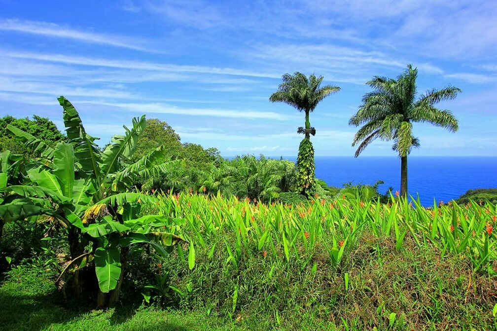 тропический сад гавайи фото упразднения