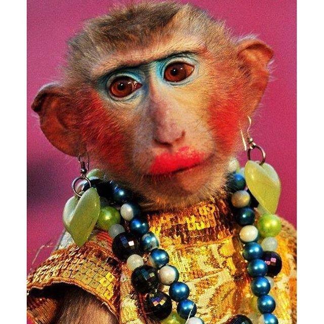 Днем, смешные картинки обезьян накрашенных