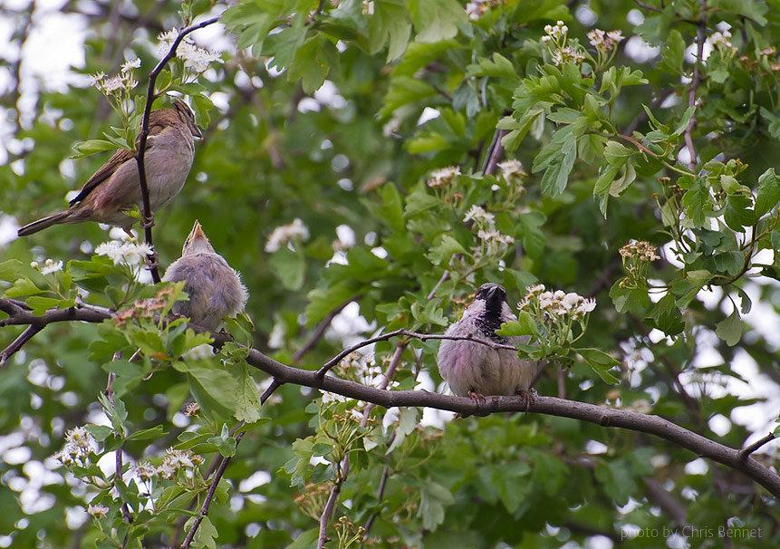 времени картинки весенний лес с птицами варить манты
