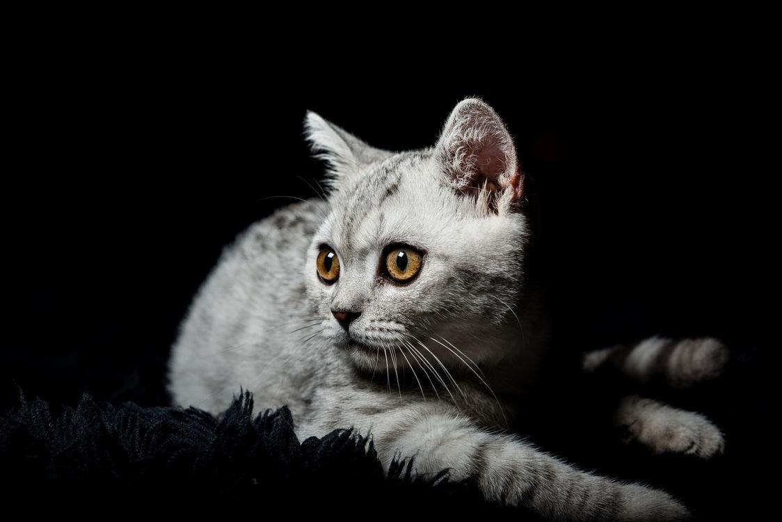 Картинка кошка на черном фоне