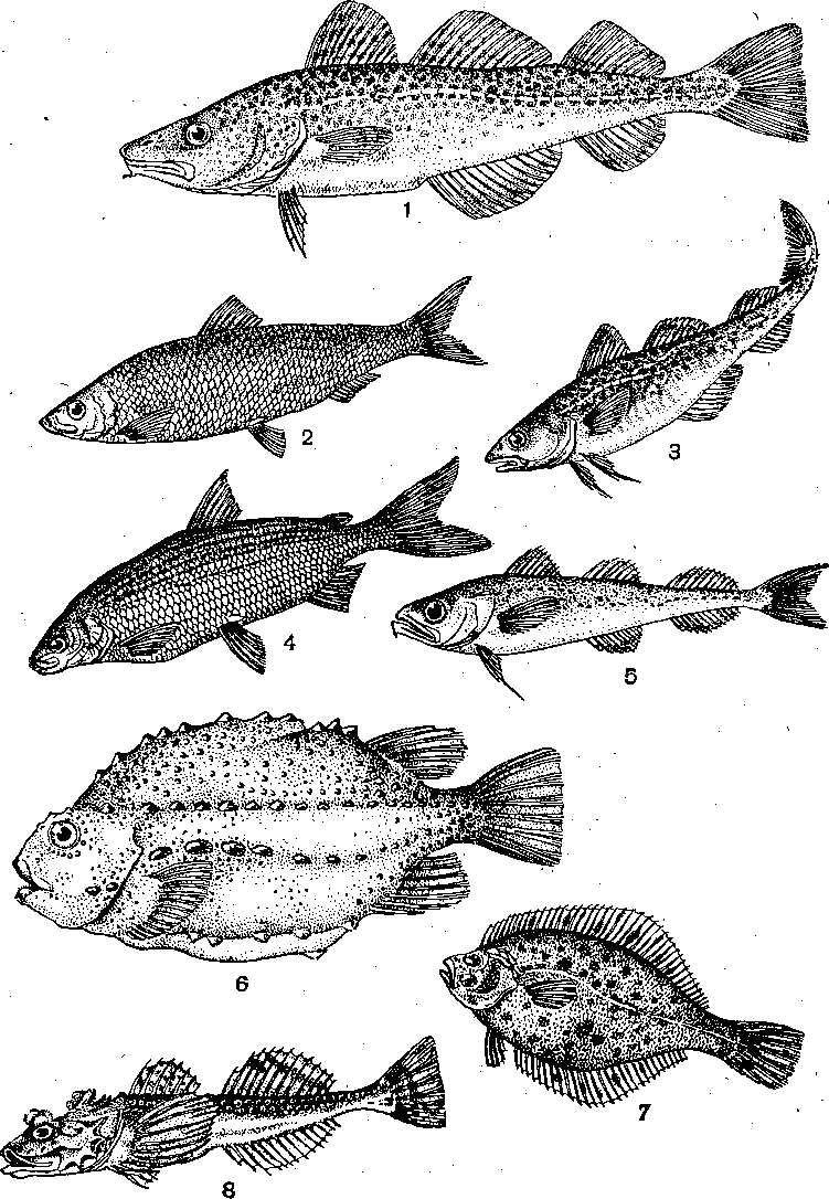 Рыба виды в картинках
