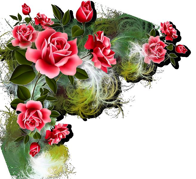 картинки цветов без рамки это бабцы, что