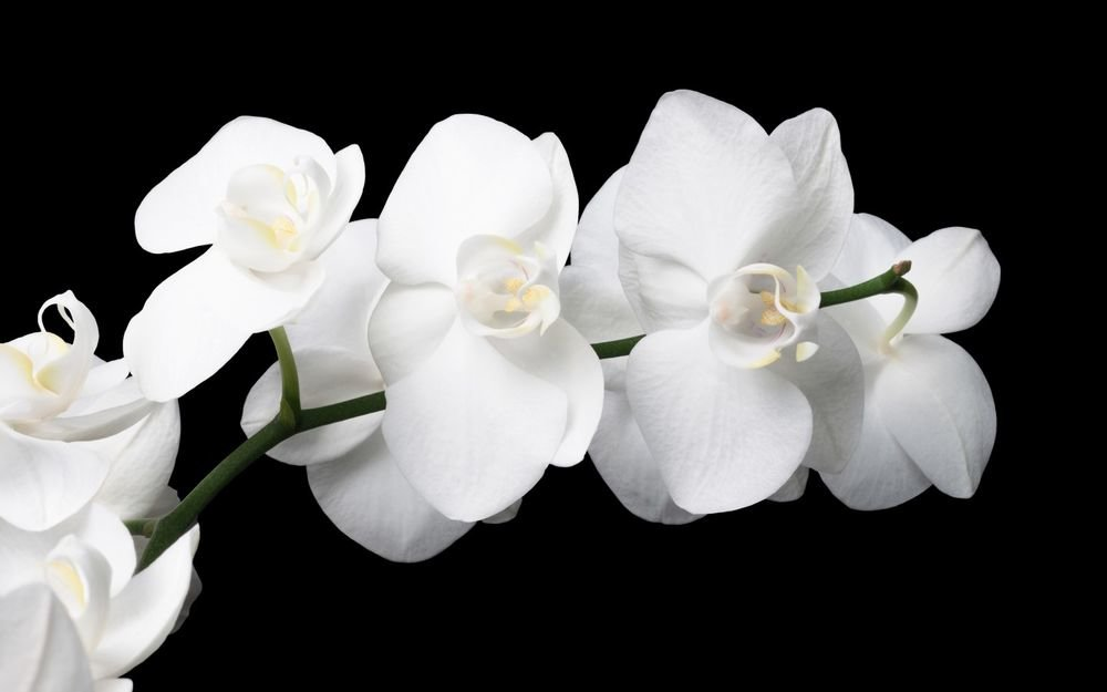 Днем, картинки белых цветов