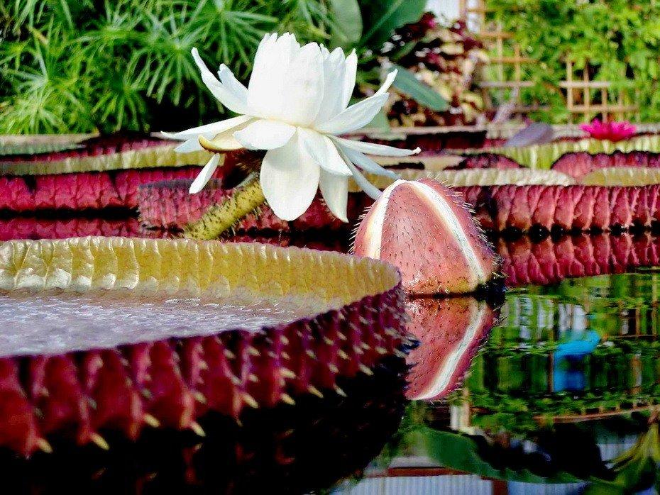 Фото цветы для виктории