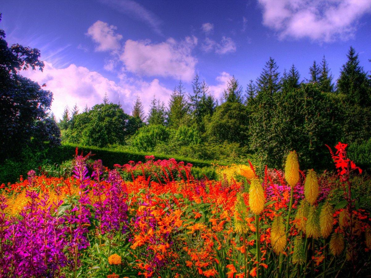 фото картинки поляна цветов пришел