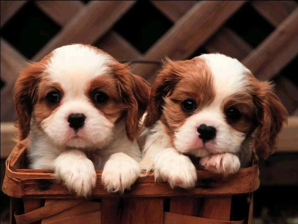 Днем рождения, красивые собачки картинки на телефон