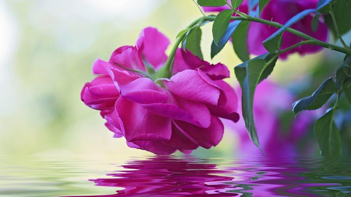 Картинки цветы анимация цветов