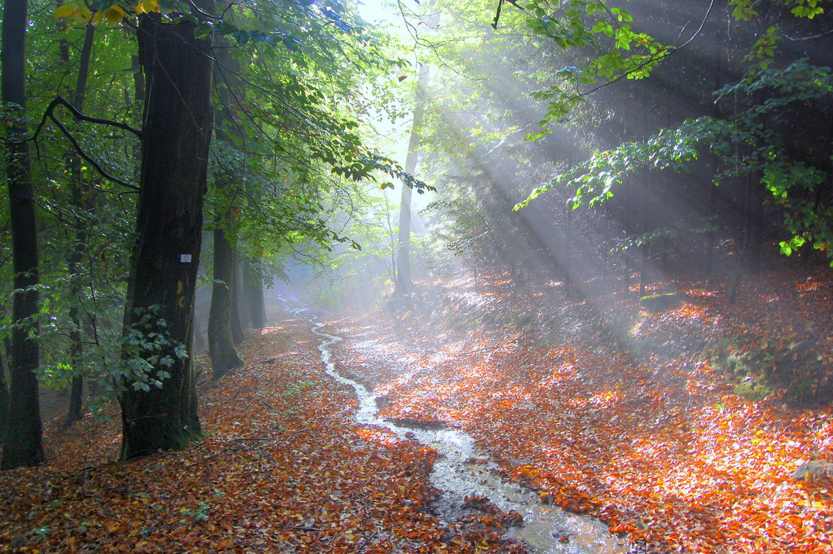 фото в лесу после дождя конечно, обратиться профессионалу