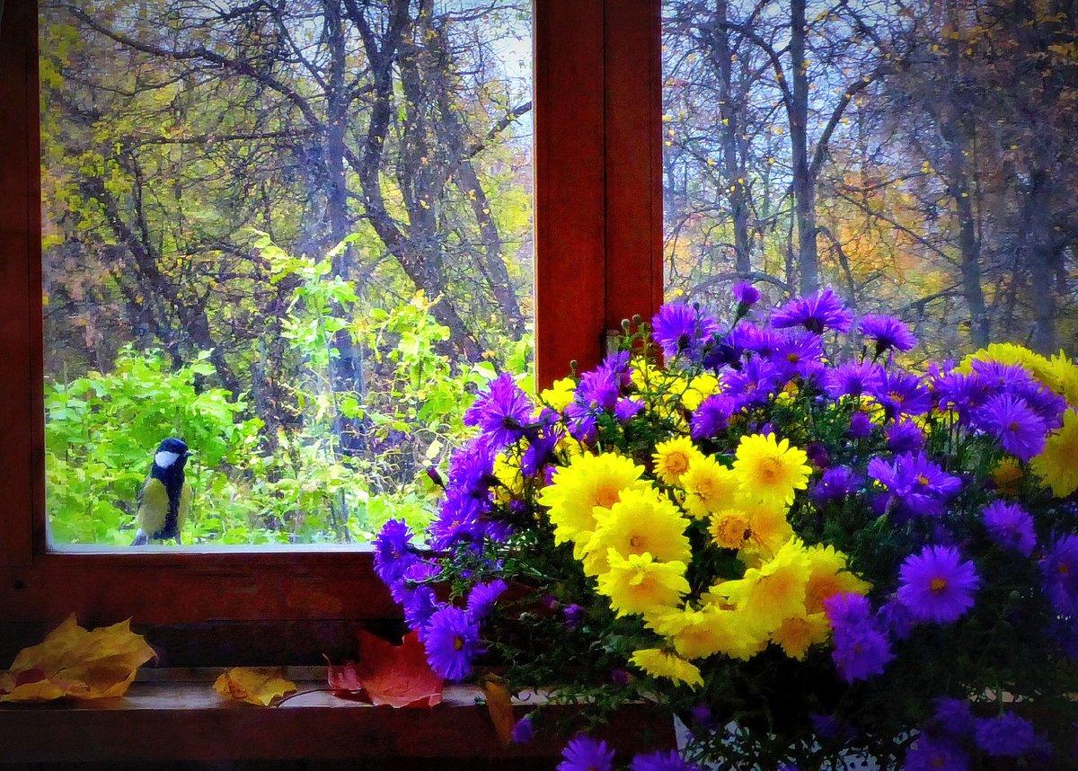 Картинки цветы на подоконнике осенний дождь