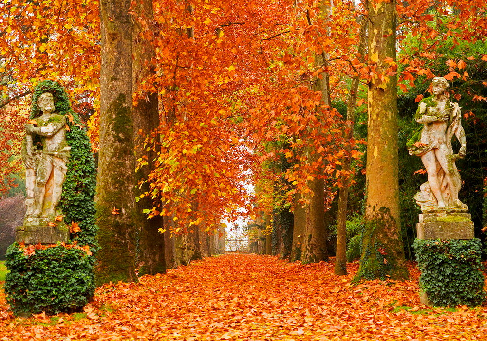 осень картинки красивые листопад