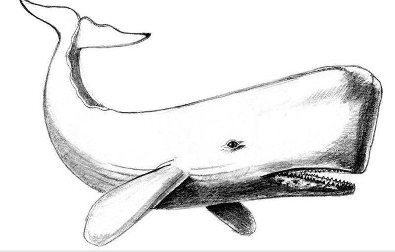 Картинки кит нарисовать