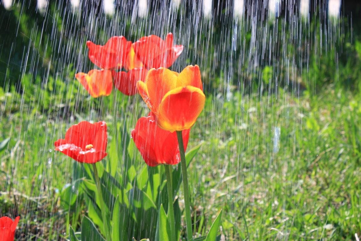 Картинки весны дождь