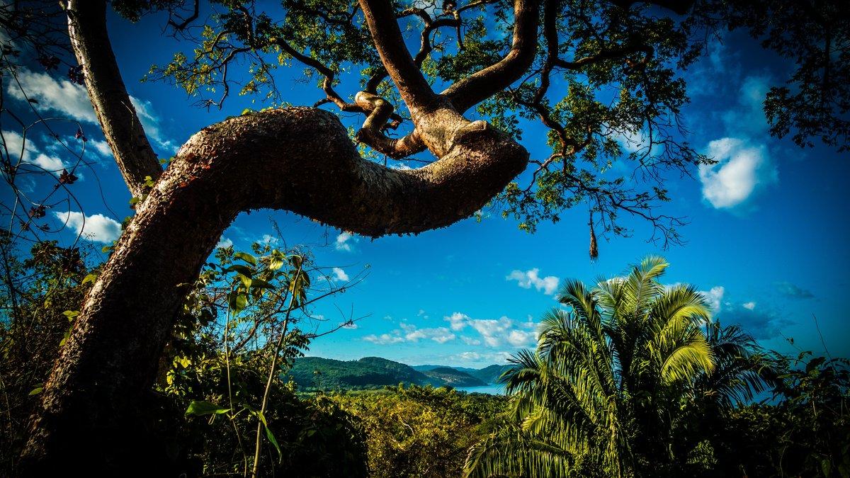 фортом картинка тропического дерева заселения гостиницу