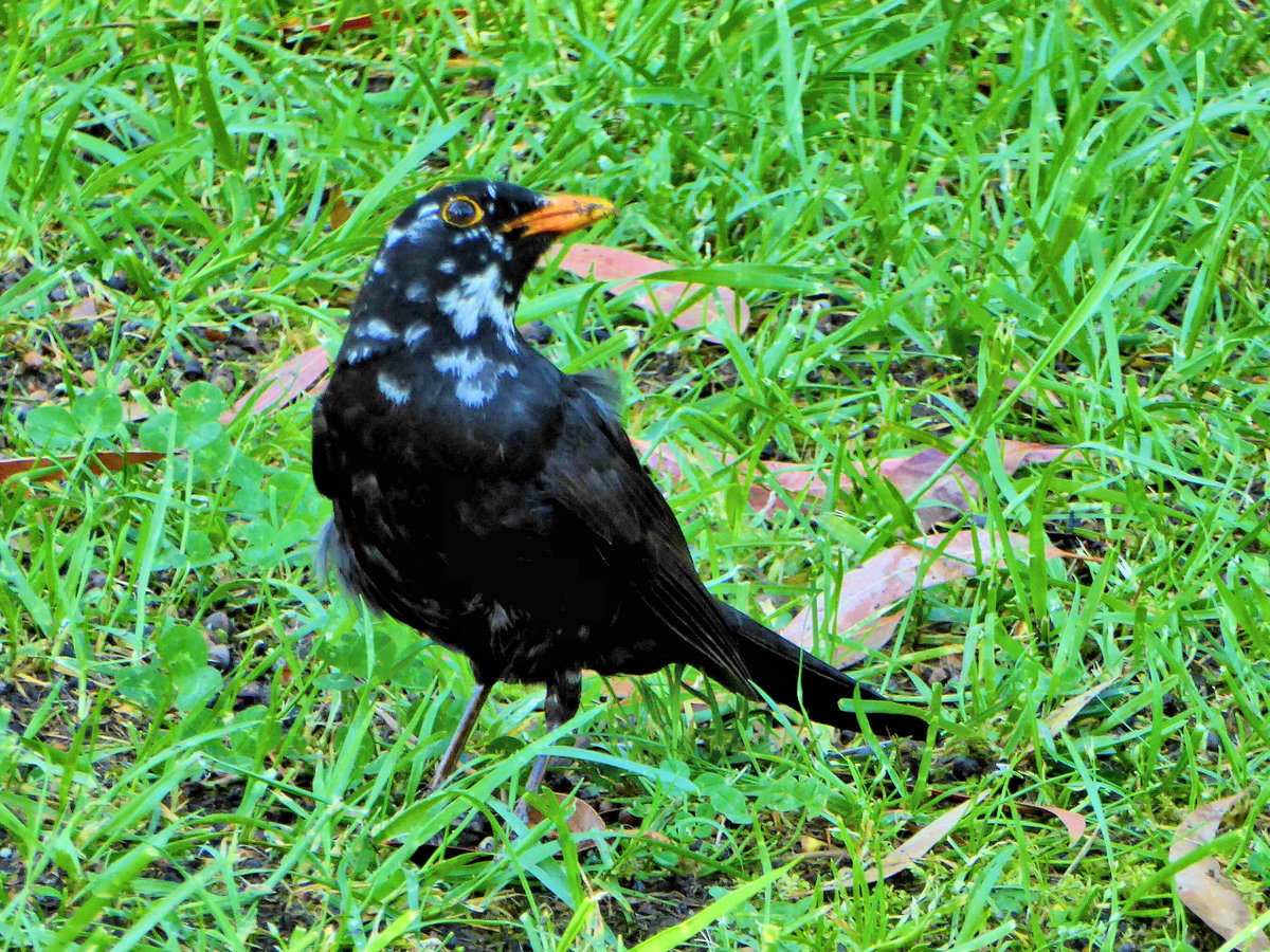 Птицы сочи фото и названия