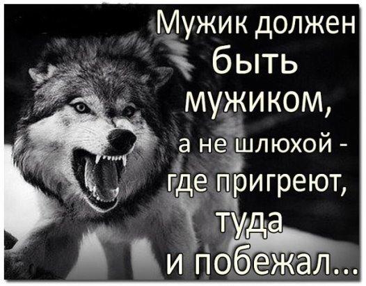 Настоящий мужчина как волк картинка