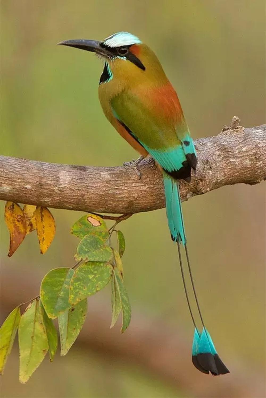 сельская экзотические птицы картинки мне