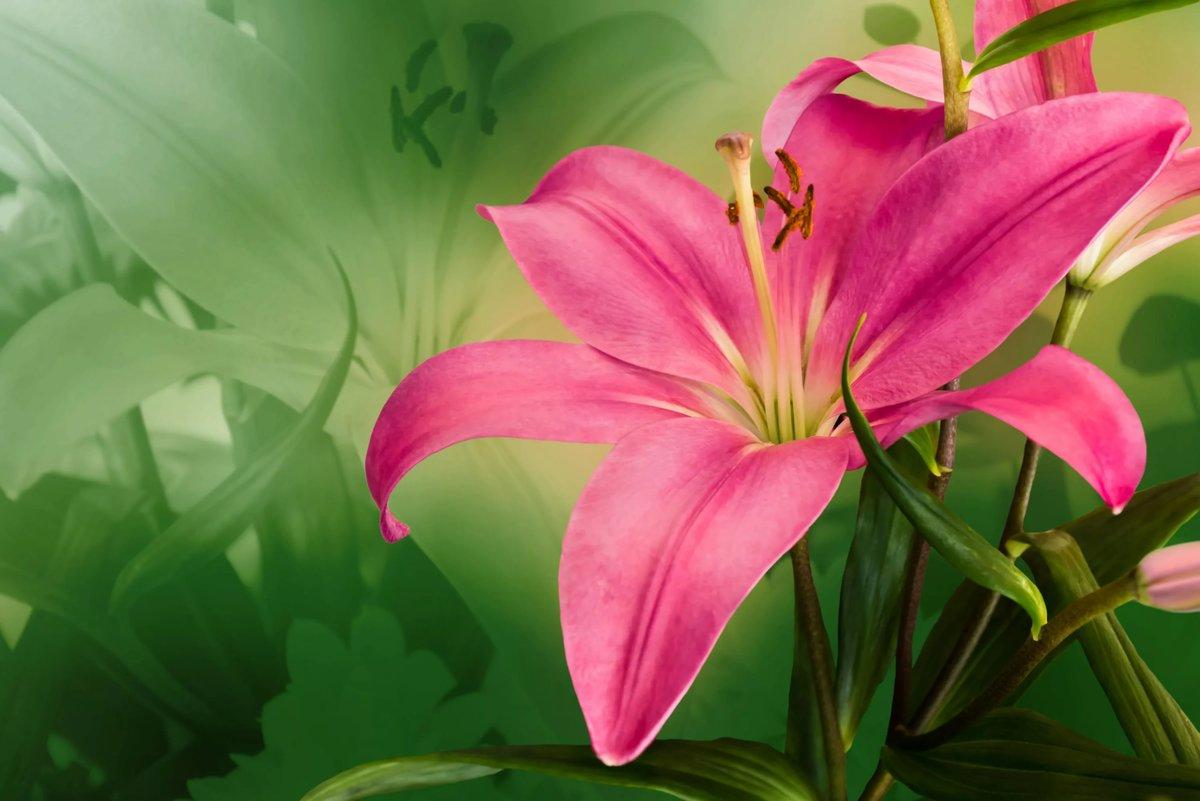 Мультяшные, картинки на телефон цветы