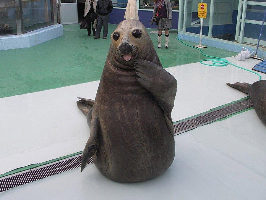Прощанием, морской котик фото прикольные