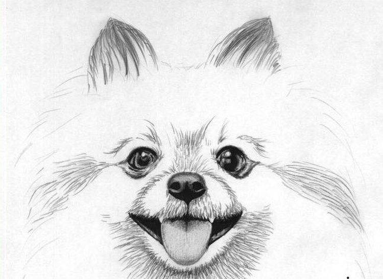 Прикольные картинки собак для срисовки, днем рождения алексей