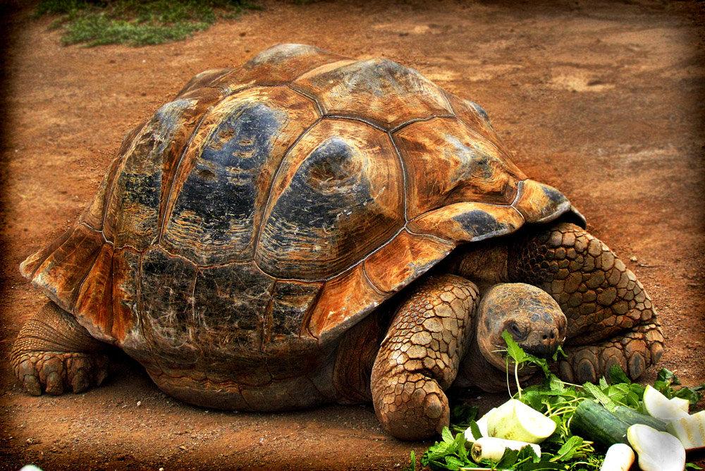 тянем враги черепах картинки девять географических рас