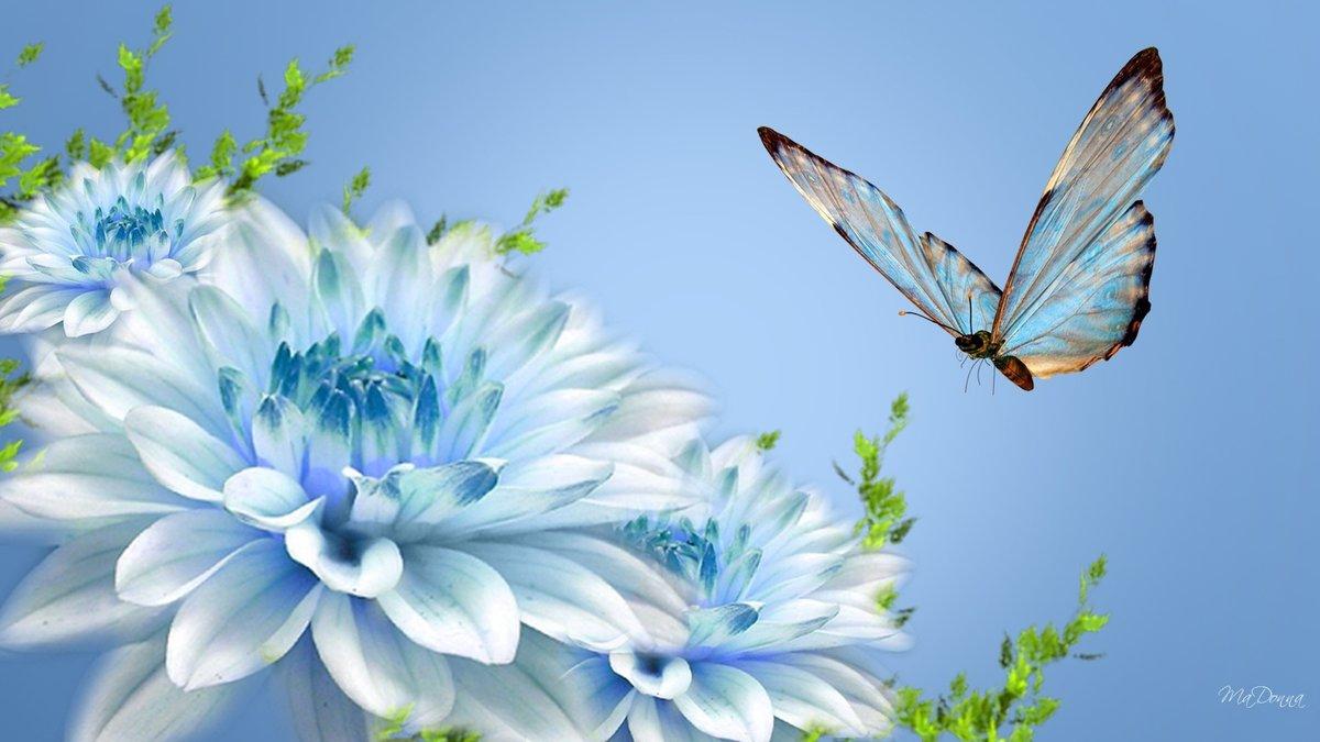 Шаблоны для, открытки с бабочками цветами