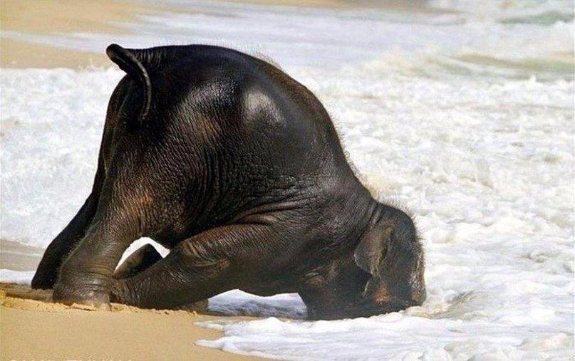 Смешная картинка слон, открытка