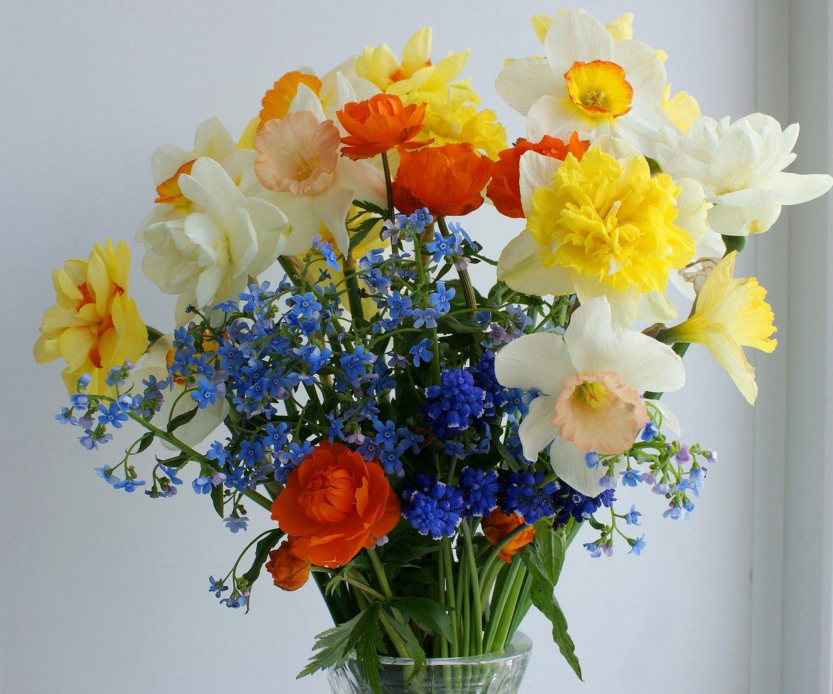 картинки цветы нарциссы букеты вашему вниманию подборку