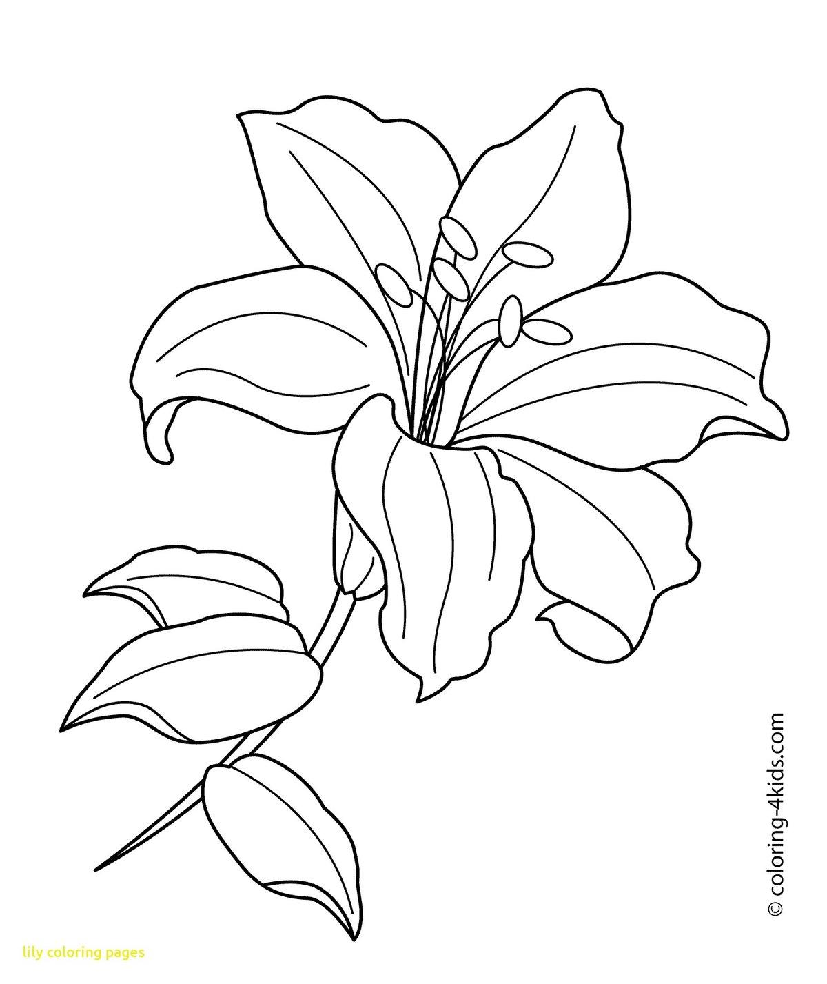 Картинка лилии контур