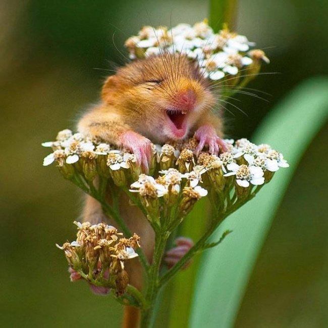 Открытка, картинки добрые позитивные смешные