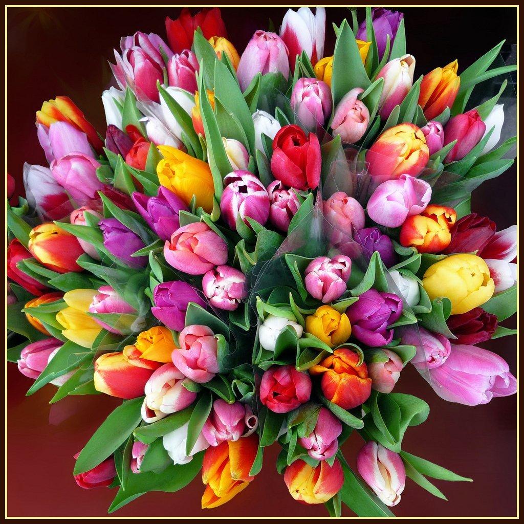 Мелким оптом, самые красивые букеты тюльпанов в мире