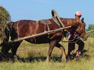 лошадь сенокос
