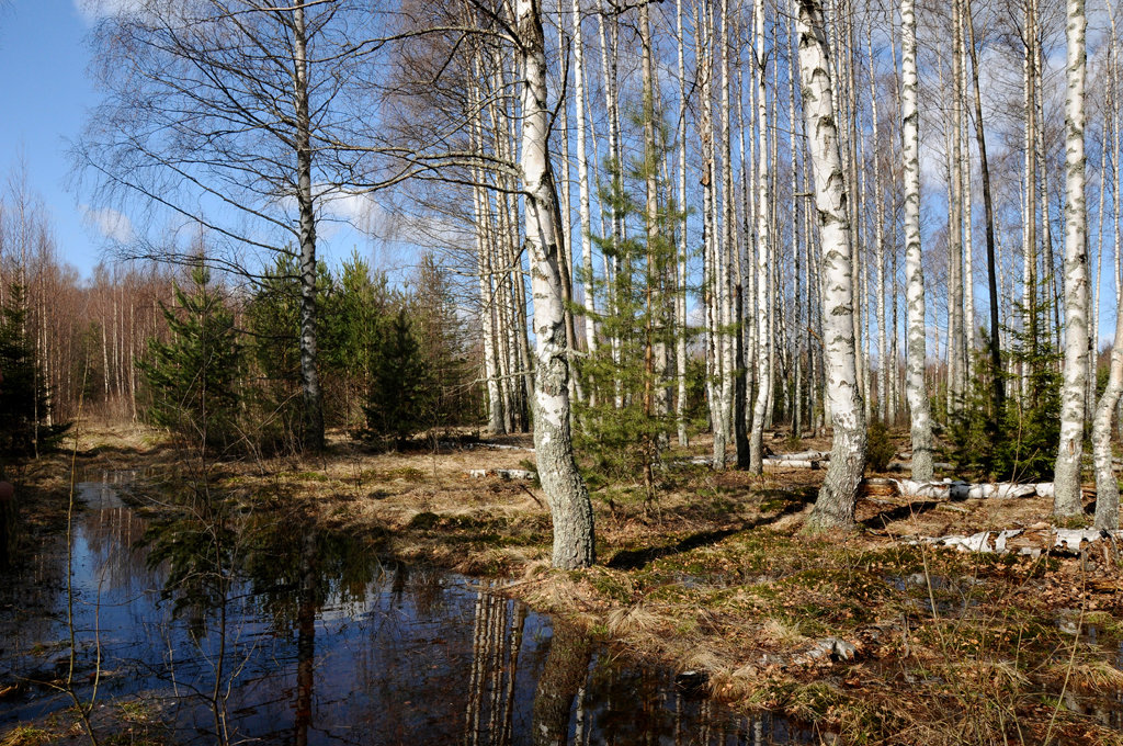Картинки про, картинки весна в лесу