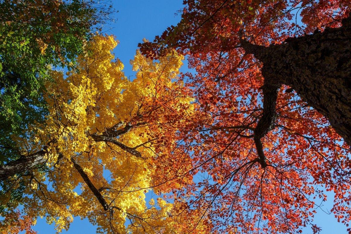Картинки все деревья