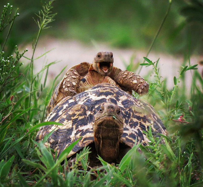 Роз, смешные картинки природа и животные