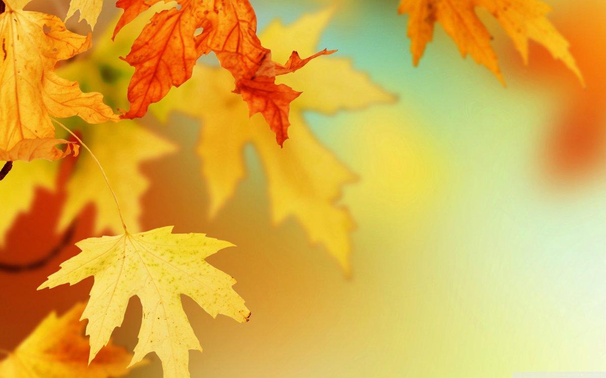Открытка фон осень