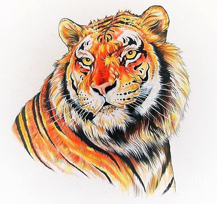 Картинки рисованный тигра