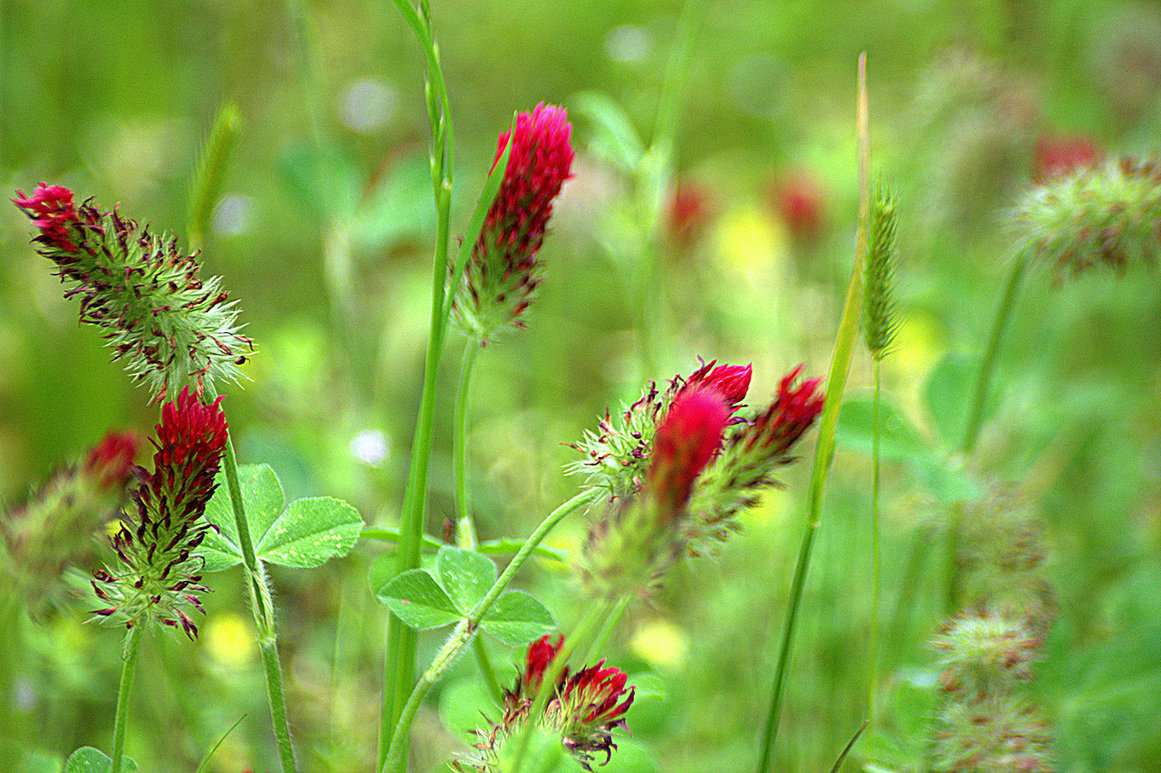 слухи картинки дикорастущих трав моделей