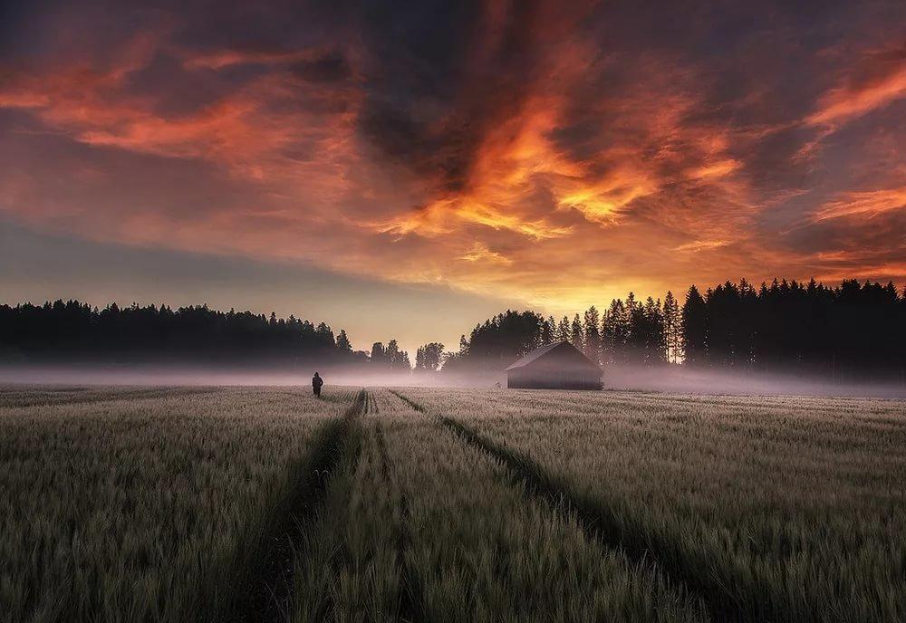 картинки в поле ночью сев мне