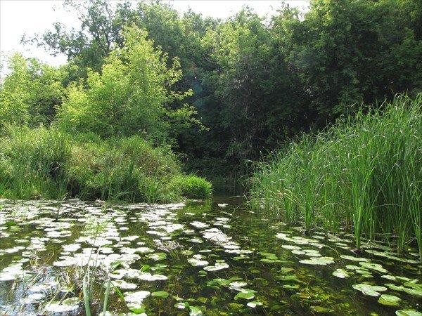 первый река лесной воронеж фото горбыля дом капитальный